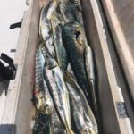 070318 Mahi Fishing Report 2 Ocean City Maryland