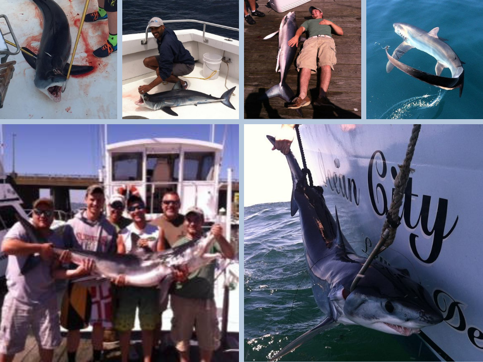 Shark Fishing Trips Ocean City Maryland (1)